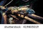 relaxing leguan | Shutterstock . vector #419805019