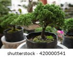 Bonsai Tree For Sale At Mexica...