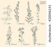 Set Of Medical Plants Mint ...