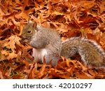 Squirrel Among Leafs