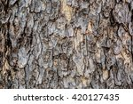 Tree Bark  Tree Bark Photo ...