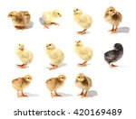 chick isolated on white... | Shutterstock . vector #420169489