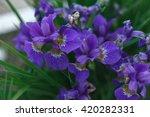 garden flowers irises | Shutterstock . vector #420282331