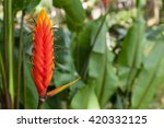 red tropical flower heliconia... | Shutterstock . vector #420332125