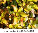 beautiful as flowers  | Shutterstock . vector #420404131