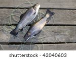 two trouts american char with... | Shutterstock . vector #42040603