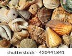 Different Sea Shells Backgroun...