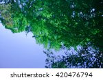 deciduous trees in the specular ... | Shutterstock . vector #420476794