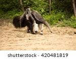 giant anteater  myrmecophaga... | Shutterstock . vector #420481819