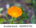Close Up View Of Orange...