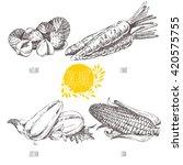series   vector fruit ... | Shutterstock .eps vector #420575755