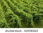 france  vineyard of riquewihr...   Shutterstock . vector #42058363