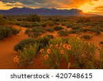 Golden Sunset With Wildflowers...