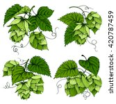 vintage designs set with hops... | Shutterstock .eps vector #420787459