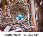 A Red Winged Blackbird Nest In...