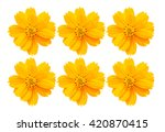 Stock photo a background concept of cosmos yellow flowers 420870415