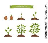 phases plant growth. sprout in... | Shutterstock .eps vector #420902224