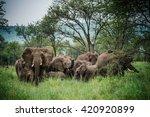 elephants in the forest | Shutterstock . vector #420920899