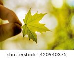 hand holding young green maple... | Shutterstock . vector #420940375