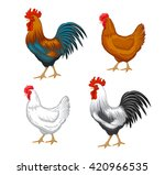Chickens Set Vector...