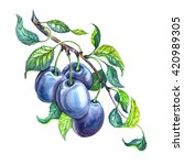 group of plums with leaves on a ... | Shutterstock . vector #420989305