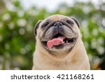 Funny Face Of Pug Dog With...