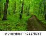 green forest and the path | Shutterstock . vector #421178365