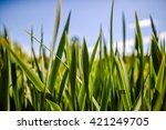 green grass and blue sky | Shutterstock . vector #421249705