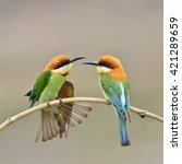 beautiful birds the dual...   Shutterstock . vector #421289659