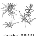 cannabis plants hand drawn... | Shutterstock .eps vector #421372321