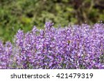 A Bunch Of Purple  Lupin