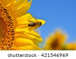 Honeybee Collects Nectar On Th...