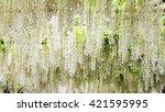ashikaga park  japan   may 10 ... | Shutterstock . vector #421595995