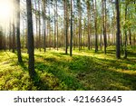 fresh spring fine forest at... | Shutterstock . vector #421663645