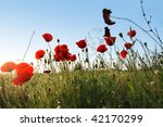 red poppies on a green field on ... | Shutterstock . vector #42170299