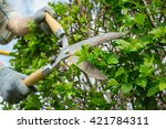 pruning shears in hand.... | Shutterstock . vector #421784311