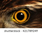 sparrow hawk eye | Shutterstock . vector #421789249