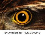 Sparrow Hawk Eye