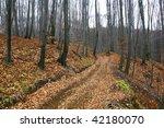 autumn forest road in gloom... | Shutterstock . vector #42180070