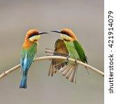 beautiful birds the dual...   Shutterstock . vector #421914079