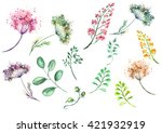 A Set Of Watercolors  Flowers ...