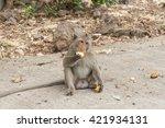 Monkey Sitting On The Floor ...
