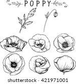 poppy flowers  drawings vector | Shutterstock .eps vector #421971001