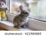 Little Grey Bunny Rabbit Sits...