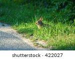 Bunny Prepares To Cross The Road