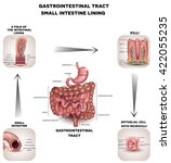 normal gastrointestinal tract... | Shutterstock . vector #422055235