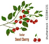 cherry compositions. cherry... | Shutterstock .eps vector #422084131
