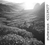 Tea Mountain Nature Plantation...
