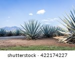 agave tequila landscape to... | Shutterstock . vector #422174227