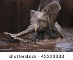 Young Elephant Having Fun In...